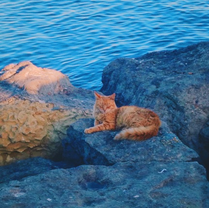 A cat takes a nap on the ocean rocks, near the fishing boats.