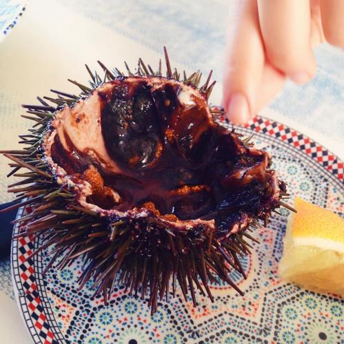 sea urchins taste good!
